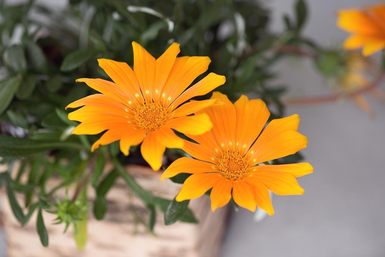 Flower 1461478 1280