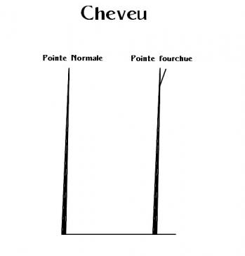 Pointes fourchues