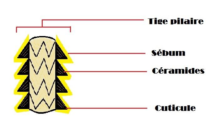 Tige pilaire 2